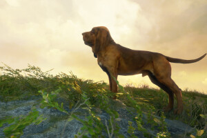theHunter: Call of the Wild™ — Bloodhound